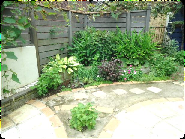 庭の剪定1