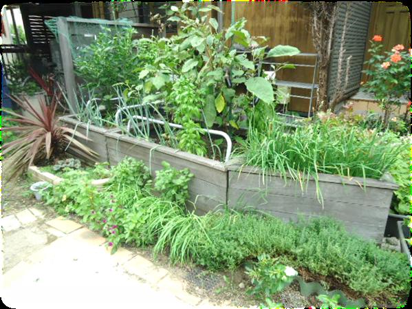 庭の剪定2