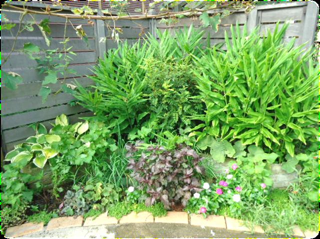 庭の剪定3