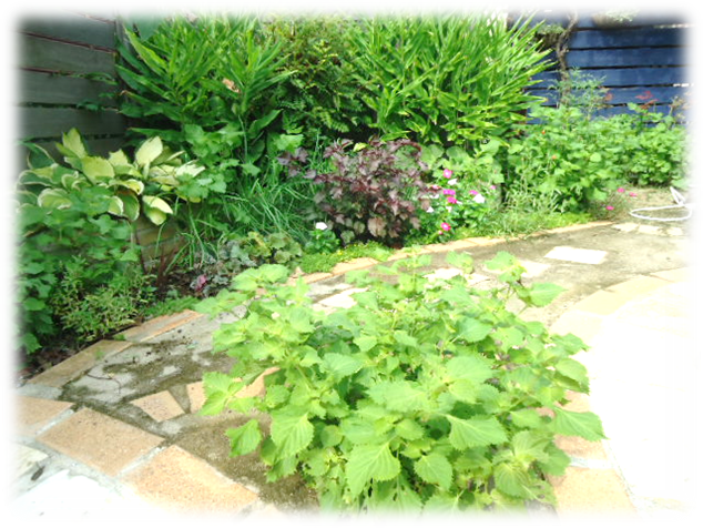 庭の剪定4