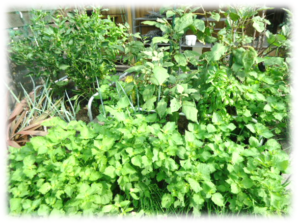 庭の剪定5