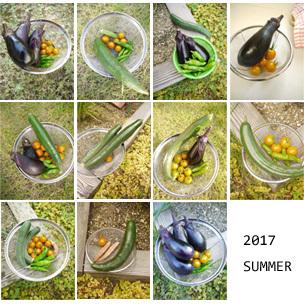 farm2017-48.jpg