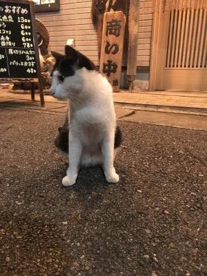 2017.6.29猫4