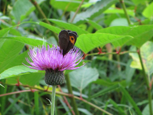 湿原の花々2