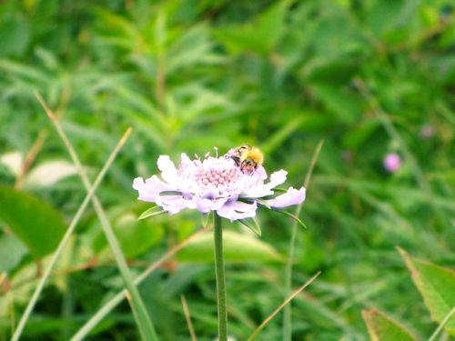 湿原の花々3