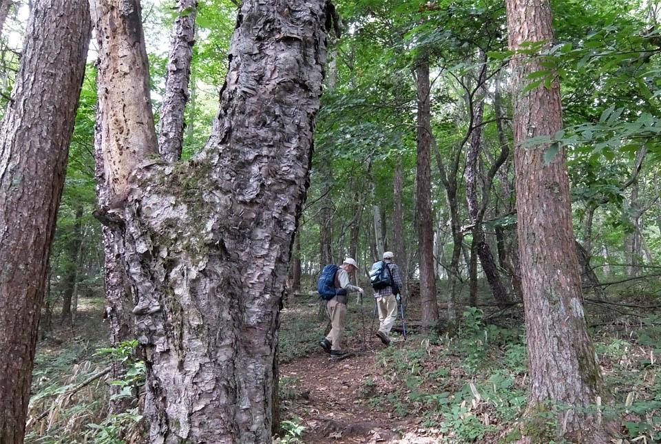 5132 林を行く 960×645