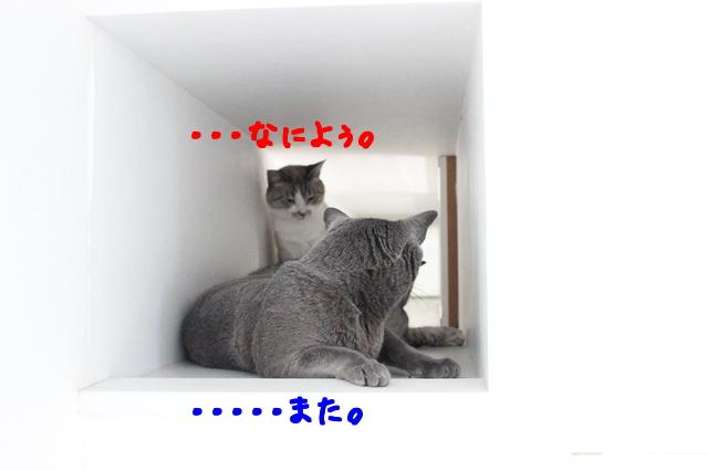XNgubON2noQtxJ91500647377_1500647460.jpg