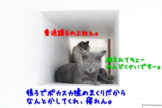 iW8B5vG_dhtKQpA1500647584_1500647716.jpg