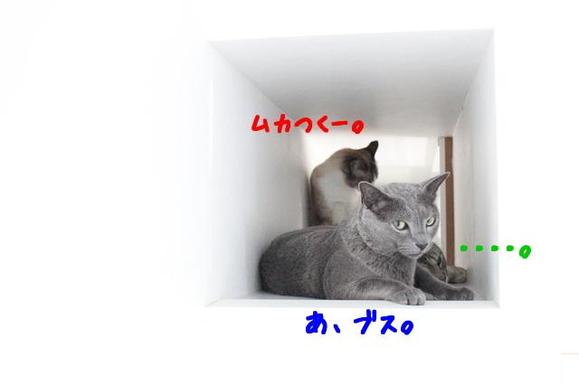 x3gYF_GOD1rlRyl1500647479_1500647570.jpg