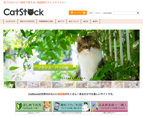 CatStock_top