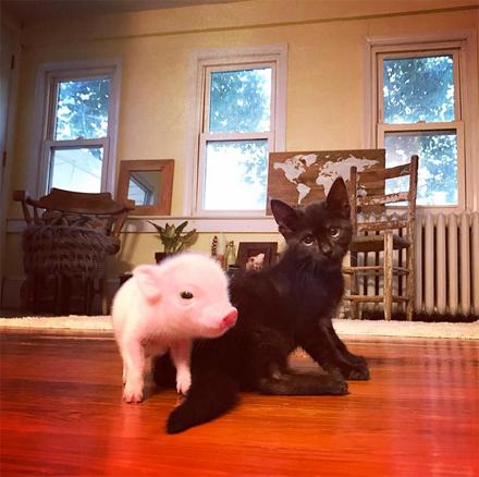 boochaces_piglet+kitten