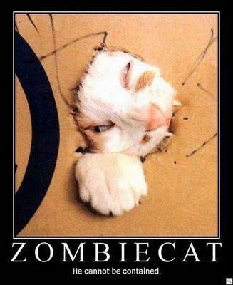zombie-cat-09