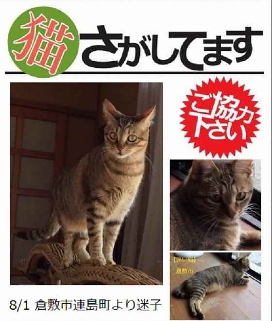 迷子猫 20170814