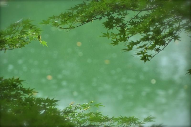 rain…雨散歩