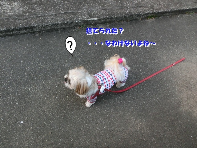 CIMG9539.jpg