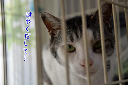 DSC_0012_2.jpg