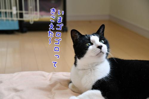 DSC_0283_2.jpg