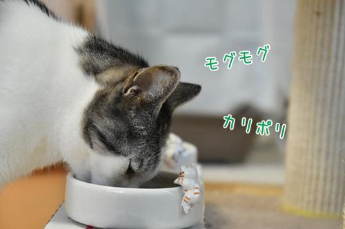 DSC_0367_2.jpg