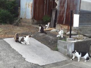 IMG_5315 猫溜り