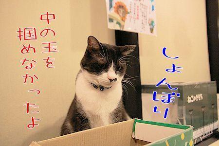 黒丸20170731-03
