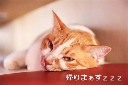 小豆20170810