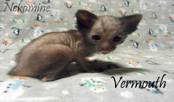 Vermouth3wb.jpg
