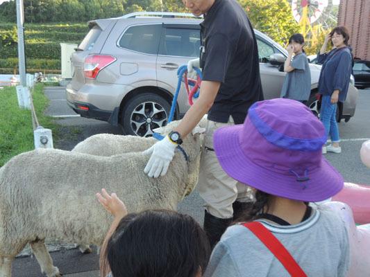 羊に触るDSCN9391