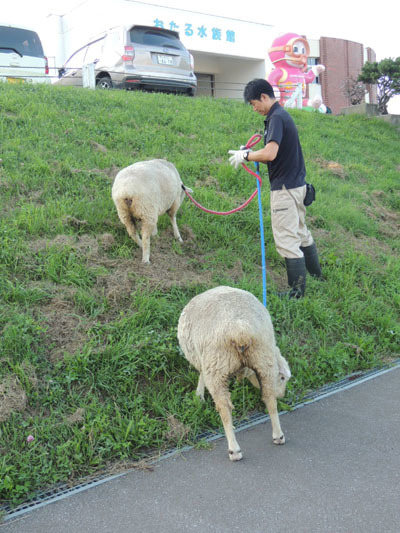 羊終業DSCN9389