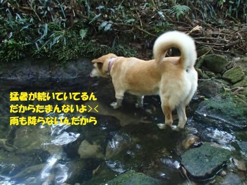 P8030559_convert_20170807104313.jpg