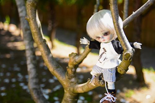 WITHDOLL、Happy Ending Story - Wolf Rudyのルディ。またしても、木に登ったはいいけれど、降りられなくなっている様子。