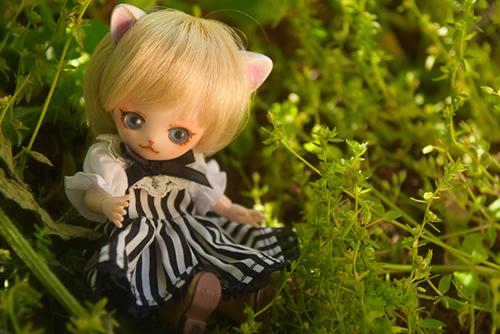 オビツ11ボディ、PARABOXヒカリちゃんヘッドをカスタムして作った猫っ子ポー。シマシマワンピースでお嬢様度アップです。