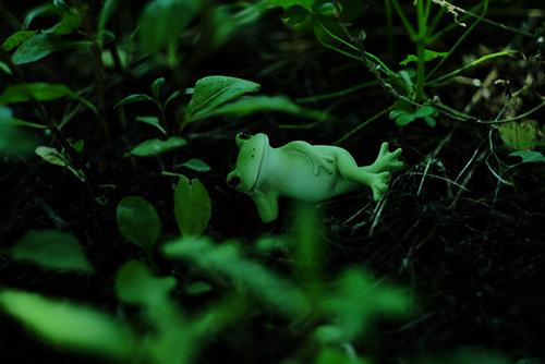 ツバキアキラが撮った、カエルのコポーシリーズ・Mr.Frog。草むらに寝転んで。