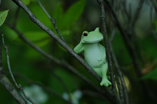 ツバキアキラが撮った、カエルのコポーシリーズ・Mr.Frog。木登りだってできるんです。