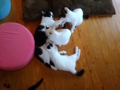 まだミルク?マミちゃんと子猫達