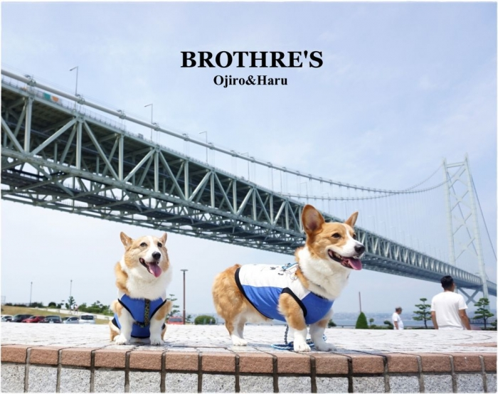 brothersoh.jpg
