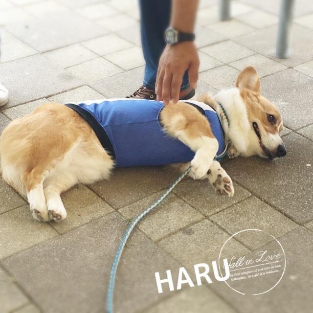 haru771.jpg