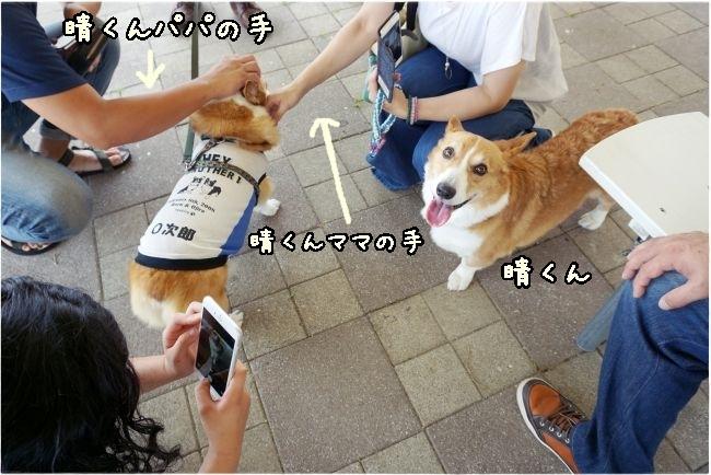 yoshiyoshizumuz.jpg