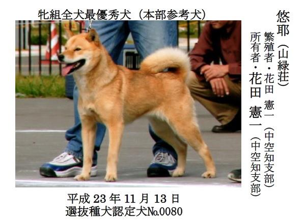 第71回全犬種GCH展-03