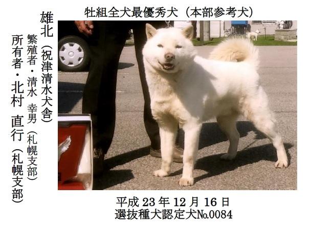 第71回全犬種GCH展-04