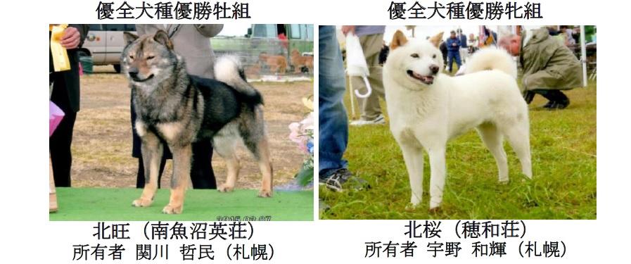 第71回全犬種GCH展-06
