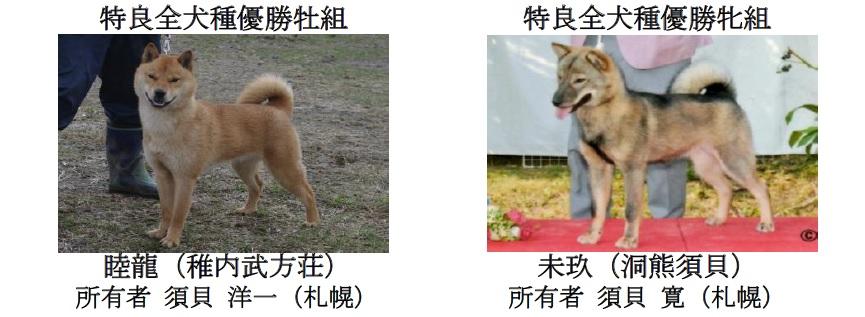 第71回全犬種GCH展-08