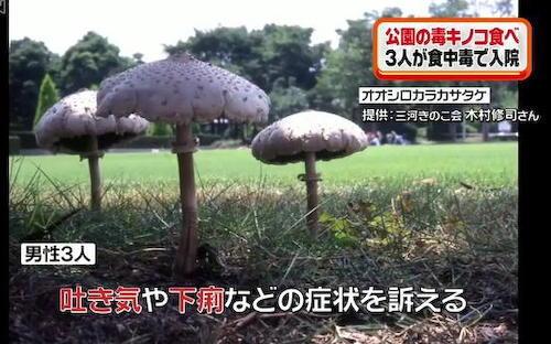 毒キノコ オオシロカラカサタケ デイキャンプ場 荒子川公園 名古屋