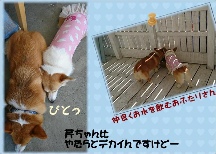 DOG TOOTH 芹ちゃんと