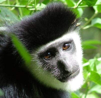 猿 俯瞰 眺める