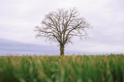 樹木 一本杉 至高