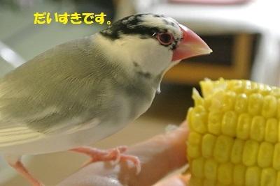 DSC_7667済