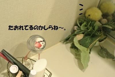 DSC_7601済