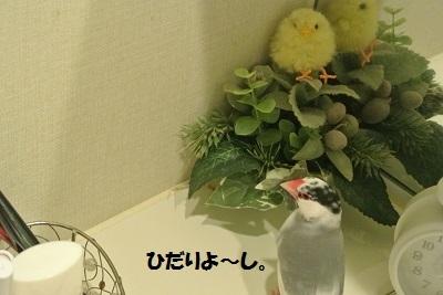 DSC_7622済