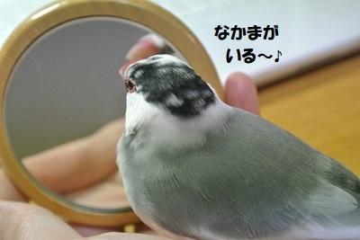 DSC_7750済