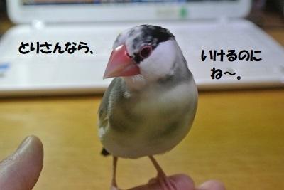 DSC_7801済